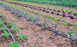 Nuestras hortalizas