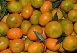 Naranjas clemenules cosecha propia