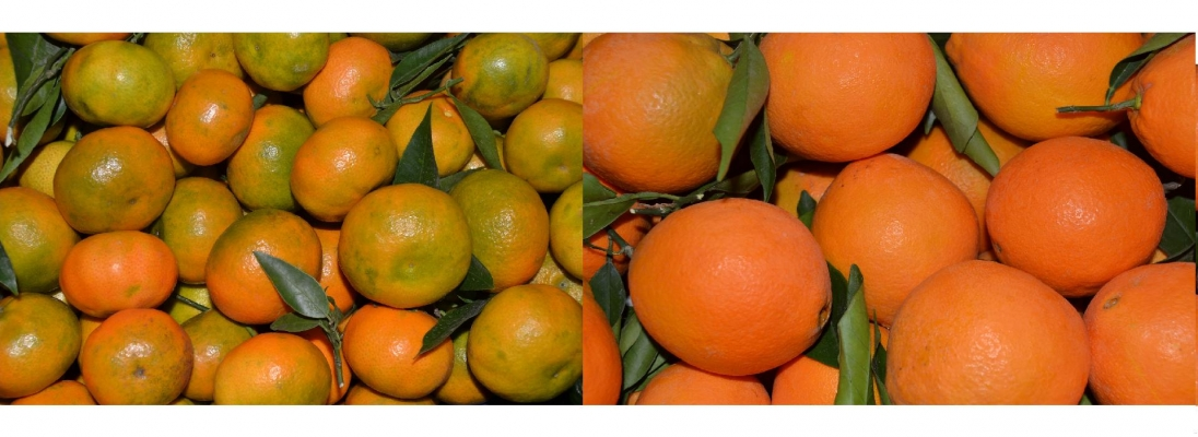 Cajas de naranjas recién cogidas