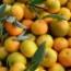 Naranja clemenules
