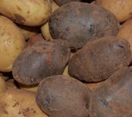 Patatas tipos