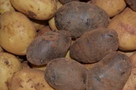 Caja Patatas Variadas 7 Kg