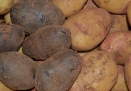 Patatas variedades caja