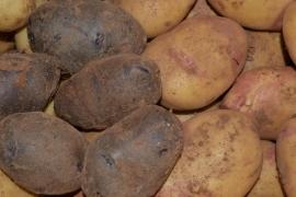 Caja Patatas Variadas 10 Kg