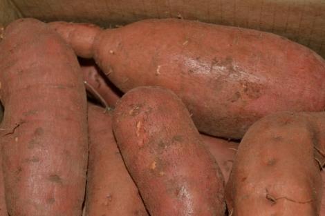 Boniatos caja