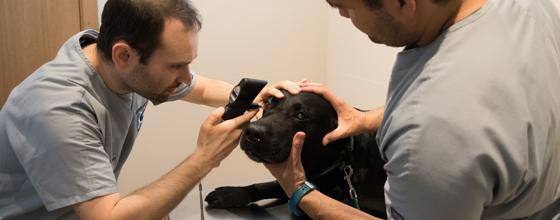¿Por qué una clínica dedicada solo a la especialidad de la Oftalmología?