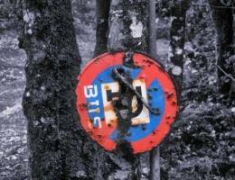 Señal en el Bosque